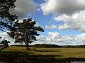 Gmina Narew, Poland - panoramio (21).jpg