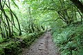 Going down to Rowberrow Bottom - geograph.org.uk - 996736.jpg