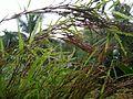 Grass drops.jpg