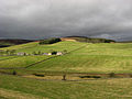 Grazing fields at Blackhaugh - geograph.org.uk - 703956.jpg