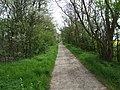 Green Lane - geograph.org.uk - 409490.jpg