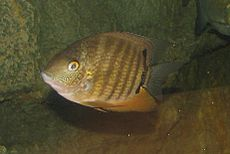 Green Severum 002.jpg
