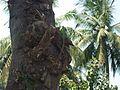 Green lizard1.jpg