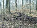 Hügelgrab 3 Bückel.JPG