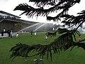 HK 中山紀念公園 Sun Yat Sen Memorial Park lawn 異葉南洋杉 Norfolk Island Pine watering time April-2012.JPG