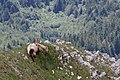 Hafelekar - panoramio (13).jpg