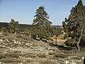 Halkalı Dikenli talla - panoramio.jpg