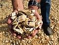 Handful of biomass.jpg