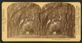 Hanging Moss, Bonaventure, Ga, from Robert N. Dennis collection of stereoscopic views.png
