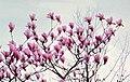 Hangzhou, Botánico 1978 06.jpg