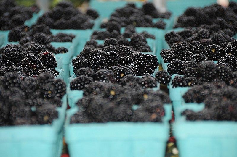 File:Harrisonburg VA farmers market 1 (4953472239).jpg