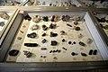 Harvard Museum of Natural History (DerHexer) 2012-07-20 09.jpg