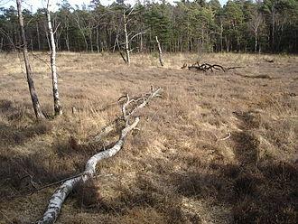 Detmold - Hiddeser Bent, moor near Donoper Teich
