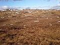 High moorland north of Carnis Mhòr - geograph.org.uk - 1765921.jpg
