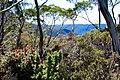 Highland scrub in Tasmania.jpg
