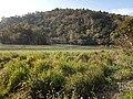 Hills @Kaziranga.jpg