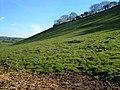 Hillside overlooking Modbury - geograph.org.uk - 274153.jpg