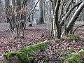 Hodgemoor Wood (2312822121).jpg