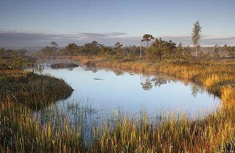 Morning in Endla Nature Reserve