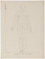 Homo sapiens - proportie van de vrouw - 1700-1880 - Print - Iconographia Zoologica - Special Collections University of Amsterdam - UBA01 IZ19400015.tif