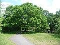 Honor Oak Park, the Oak of Honor - geograph.org.uk - 1331538.jpg