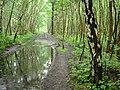 Hopwas Hays Wood - geograph.org.uk - 834322.jpg