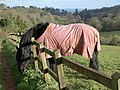 Horse, Cockington - geograph.org.uk - 752117.jpg