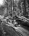 Horse teams pull an automobile from a mudhole at Snoqualmie Pass , May 1915 (MOHAI 5433).jpg