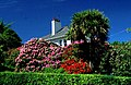 House with rhododendrons and NZ cabbage tree. - geograph.org.uk - 90258.jpg