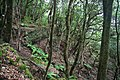 Huertas entre la laurisilva - panoramio.jpg