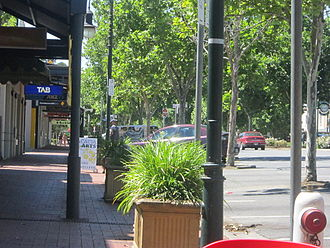 Hutt Street, Adelaide - London plane trees with strong shade canopies are a prominent feature of Hutt Street throughout its length.