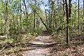 Ichetucknee Springs State Park Trestle Point trail 4.jpg