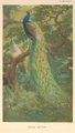Indian Peafowl by Charles Knight.png