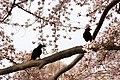 Inokashira Park 2009-04-05 (3446039903).jpg