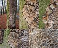 Inonotus nodulosus (GB= Silvery Porecrust, Syn. Inonotus canker, D= Buchen Schillerporling, F= Inonotus noduleux, Syn. Polypore du hêtre, NL= Beukenweerschijnzwam) Hyaline spores and causes white rot, along the N224 an - panoramio.jpg