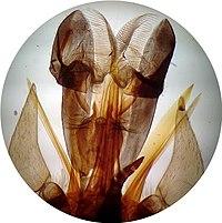 200px-Insectetaon dans MOUCHE