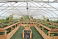 Interior of a Hoop House on the Farm at Saint Joe's, Superior Township, Michigan-2.JPG