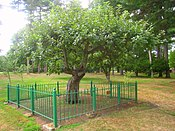 Isaac Newton apple tree, Babson College - IMG 0430.JPG