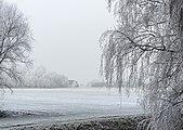 It Súd Broek, gemeente De Fryske Marren in de mist 02.jpg