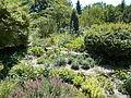 Japanese Garden. More bush. - Margaret Island, Budapest, Hungary.JPG