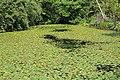 Jardin Botanique Royal Édimbourg 38.jpg