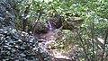 Jegenye-völgyi vízesés 20170723 154302.jpg