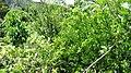 Kandaloor Fruits Farm - panoramio (1).jpg