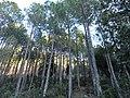 Kausani, Uttarakhand 263639, India - panoramio (1).jpg
