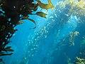 Kelp Tank (3480243642).jpg
