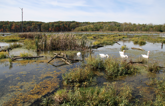 Lake Vermilion (Illinois) - Kennekuk Marshes, a wetlands area at the northern end of Lake Vermilion.