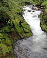 Ketchikan creek 2011-06-02.jpg