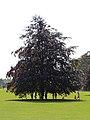 Kilkenny Castle Gardens, The Parade, Kilkenny (506844) (28757610940).jpg