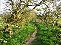 Kilrenny path - geograph.org.uk - 405526.jpg
