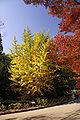 Kobe municipal forest botanical garden06s3872.jpg